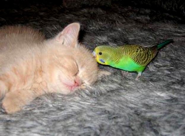ξύπνημα-παπαγάλος-γατούλα-kalhmera-καλημέρα