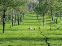 Kerala holidays tour packages