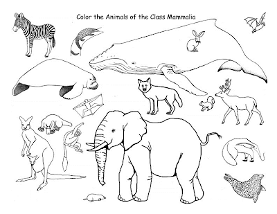 Kumpulan Contoh Hewan Mamalia