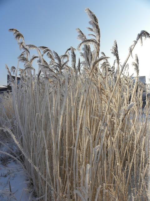 Frost Oosterheem