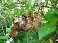 Foto macro nido de araña