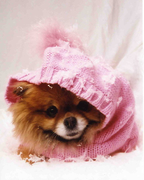 Pomeranian Clothes