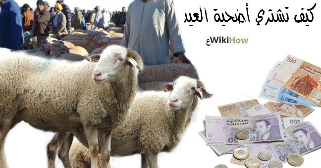 شراء أضحية العيد، نصائح لشراء أضحية العيد، عيد الأضحى المبارك،