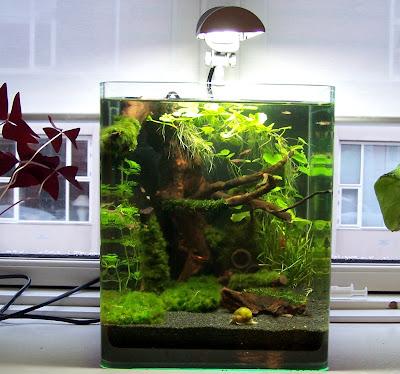 The fishtank shrimpfarm 5 gal fish tank for 4 gallon fish tank