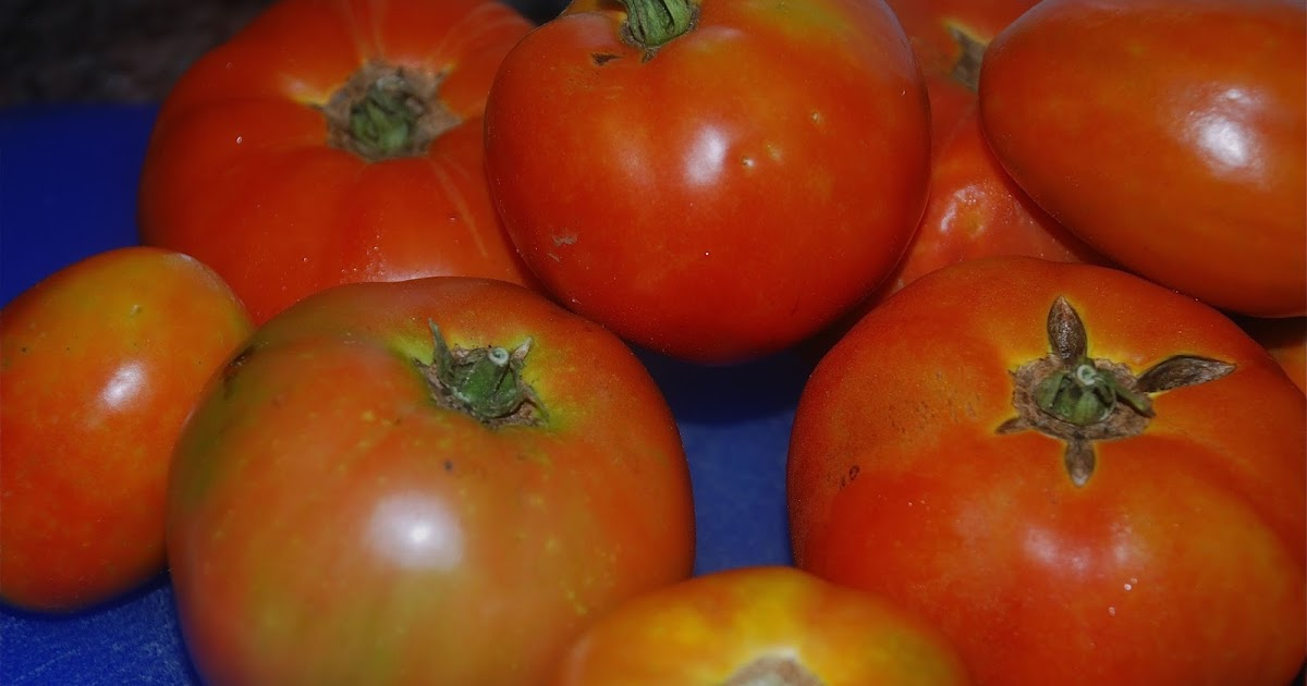 Tomatoes On The Vine Learning To Preserve Freezing Fresh