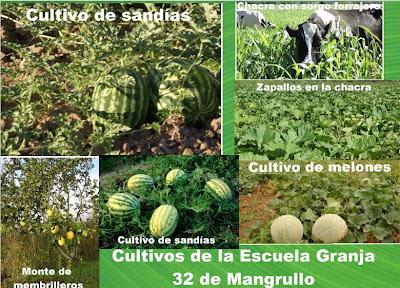 Cultivos de escuela granja