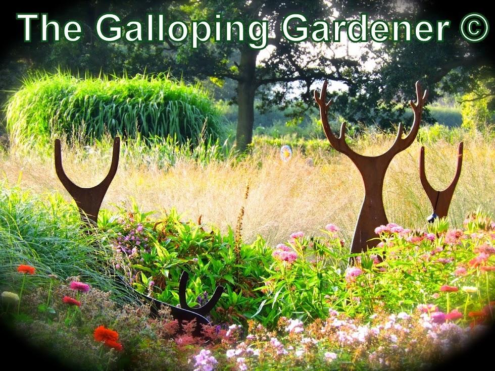 The Galloping Gardener