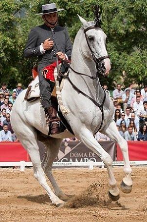Fotografías del XLIV Campeonato de España de Doma Vaquera.