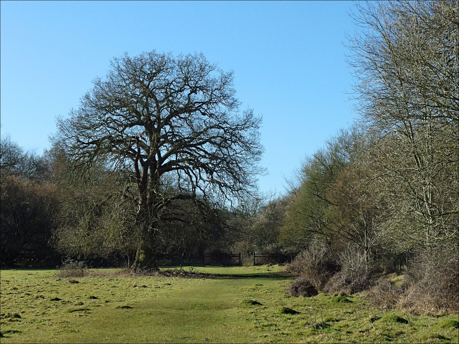 By Stargoose And Hanglandsquot Hatfield Forest Stepping Into The