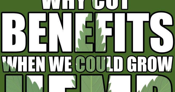 Industrial hemp returns to america colorado to plant for Soil 60 years