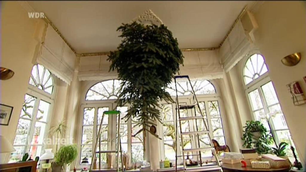 familie h ngt weihnachtsbaum an die decke lokalzeit ruhr. Black Bedroom Furniture Sets. Home Design Ideas