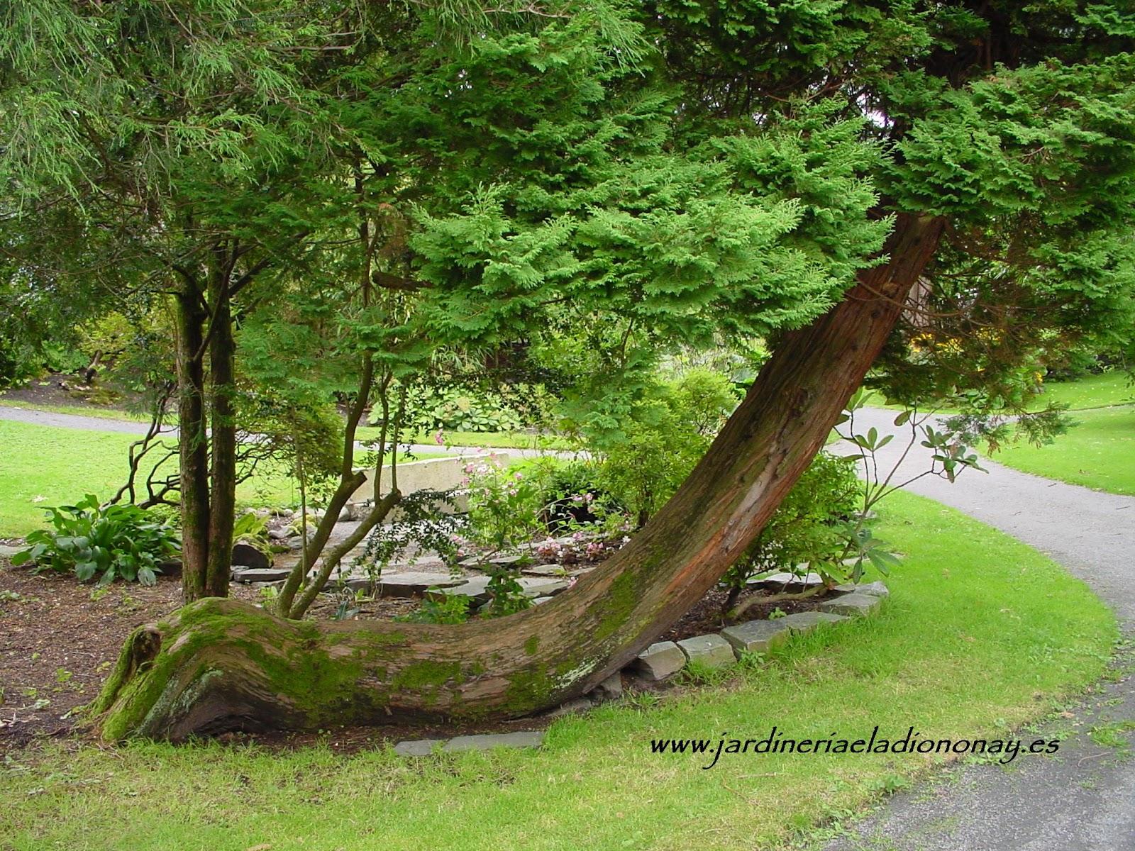 Jardineria eladio nonay zonas de relax en espacios libres - Jardineria eladio nonay ...
