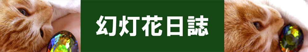 幻灯花日誌