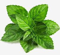 Menyembuhkan Lingkar Hitam Di Bawah Mata dengan daun mint