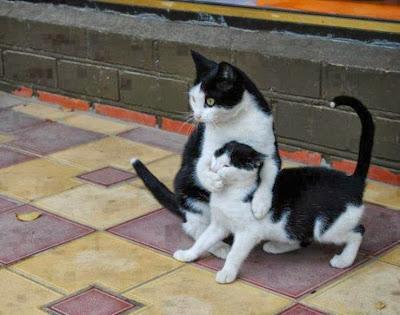 Imágenes de Gatos divertidas, funny cats