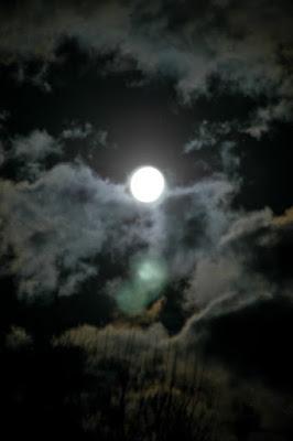 http://naturalgardening.blogspot.com/2010/11/full-moon-in-november.html