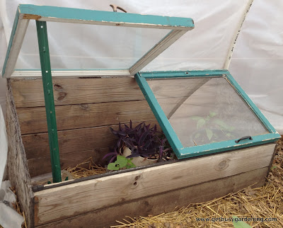 Venting the cold frame