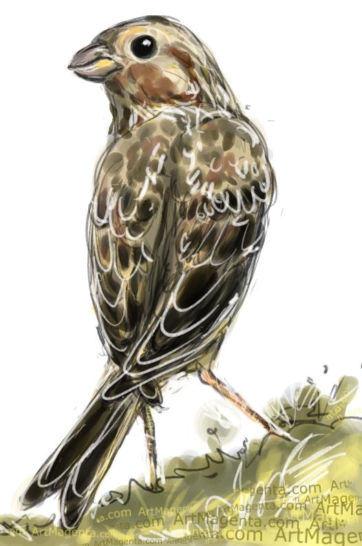 En fågelmålning av en kornsparv från Artmagentas svenska galleri om fåglar