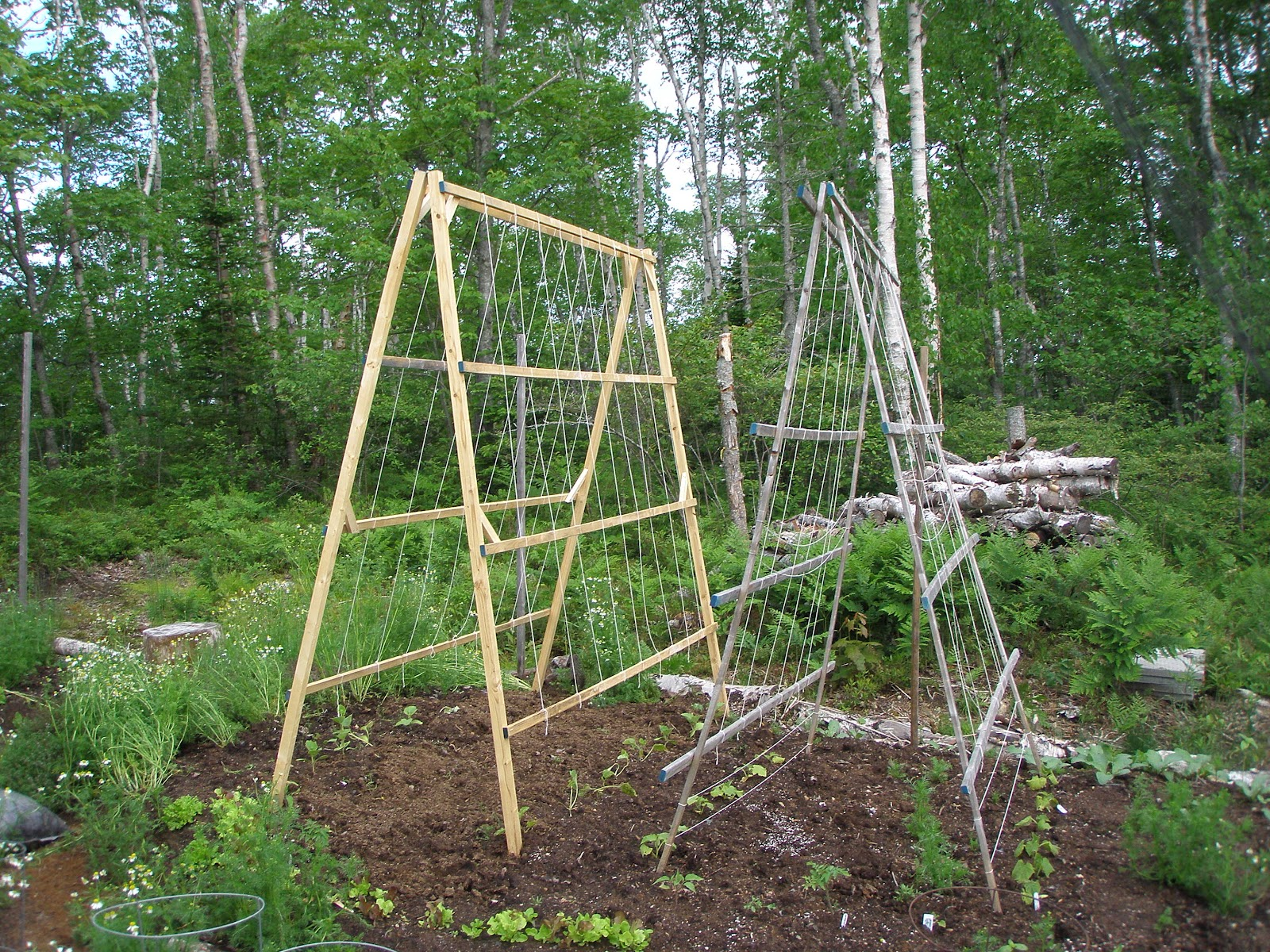 an old photo of some of my first a frame trellises simple but effective takes about an hour to make one