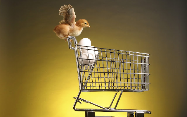 Best Jungle Life trolley, eggs, high definition wallpapers