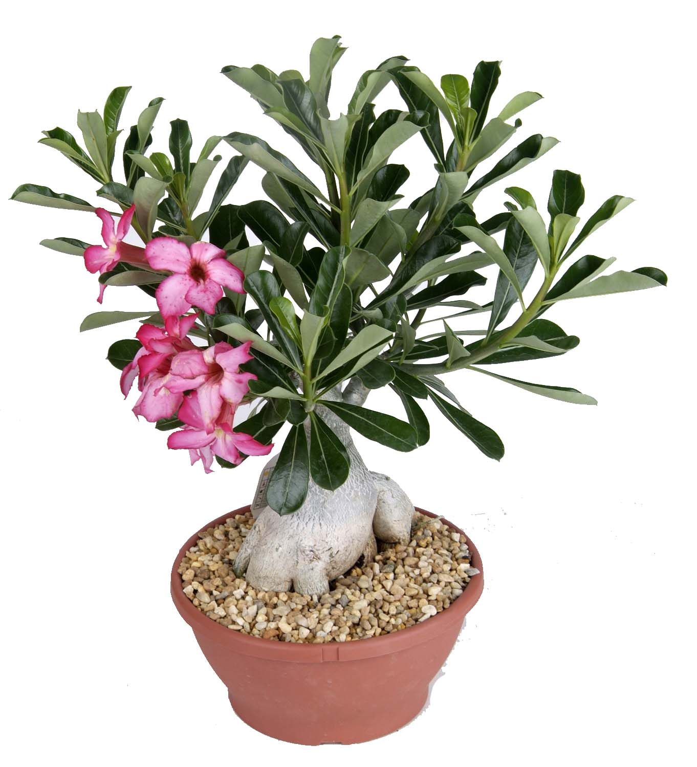 Costa farms indoor potted plant giveaway 5 winners ends 7 23 wishing penny - Indoor potted flowers ...