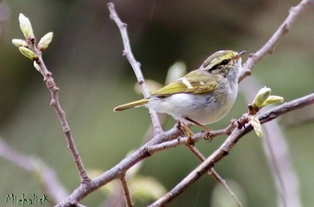 Νέο είδος πουλιού για την Ελλάδα ανακαλύφθηκε στην… Καισαριανή!