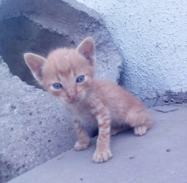 Adopciones peru ellos esperan por t gatitos bebes - Gatitos de un mes ...