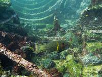 Caragua Wreck, San Cristobal, Galapagos