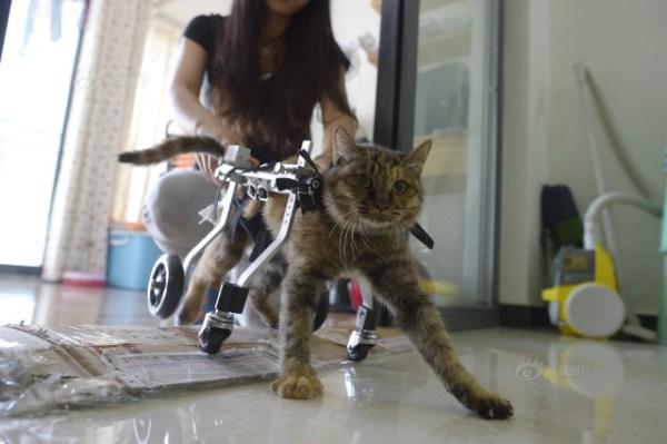 Kerusi Roda Untuk Kucing Lumpuh