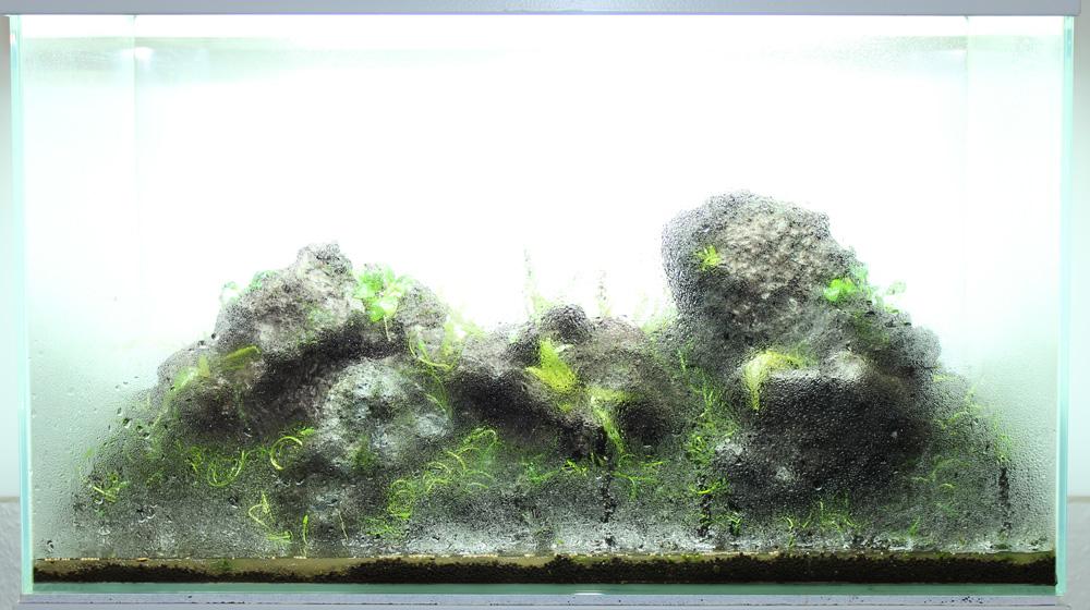 60er Glasgarten Pflanzen Ziehen Ins Aquascape Ein 60cm Glasgarden Planting Of The Aquascape
