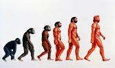 EVOLUCIÓN HUMANA: INTERACTIVO