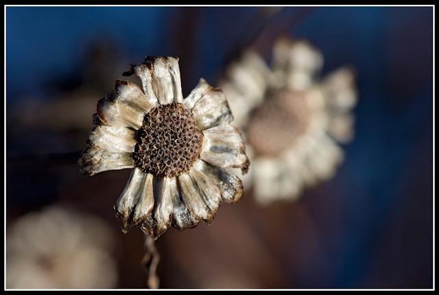 Nova Scotia; Garden; Flower