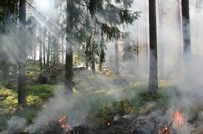 Békás-szoros—Nagyhagymás Nemzeti Park, Békás-szoros, tűz, erdőtűz, Székelyföld,