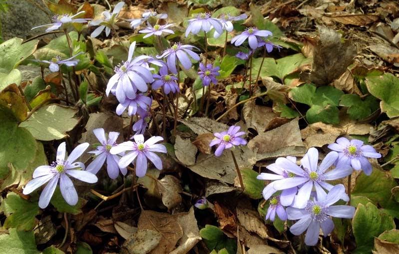 En blogg om frösådder och tips om odlingsvärda växter som även trivs i kallt klimat.