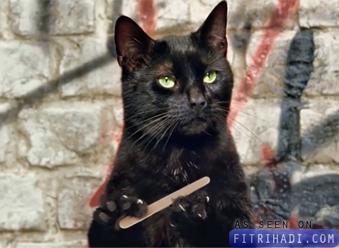 video iklan kucing comel kelakar