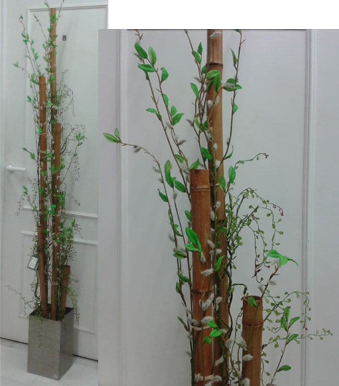 Bambu decoracion o grove - Bambu planta exterior ...