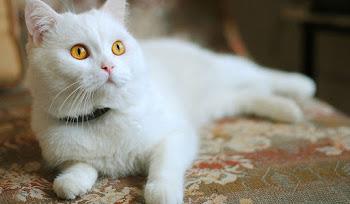 Kırıp Dökmeyi Seven Şirin Kedi