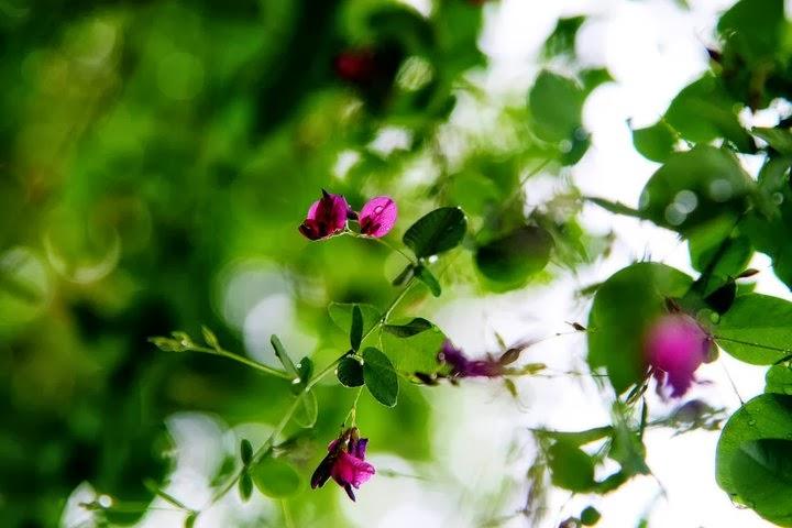 kazuhiko, miyazoe, photography, flowers