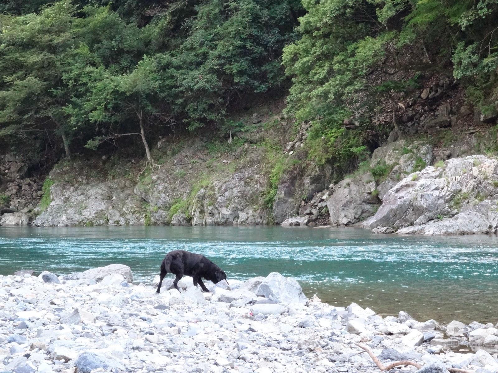 五木村観光協会 事務局Blog: 川辺川で尺ヤマメを狙う☆