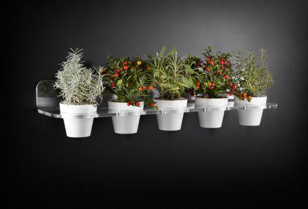 L 39 ortodimichelle febbraio 2013 - Porta piante aromatiche ...