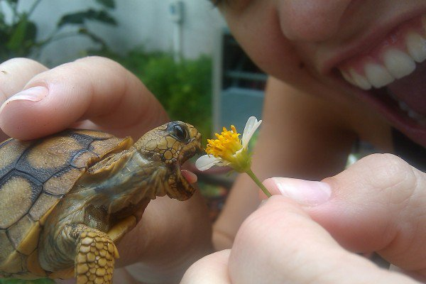 funny animal pictures, tortoise eats flower