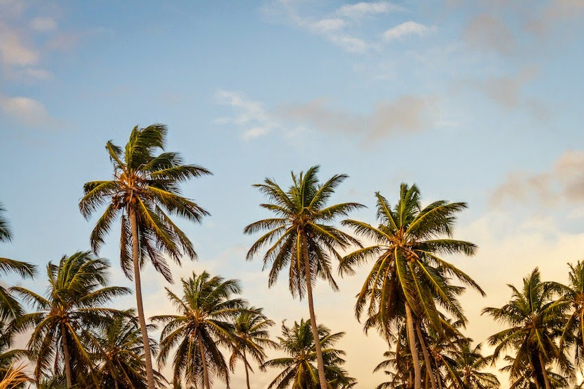 Morgan's Milieu | A Writing Exercise - The Process: Palm trees blowing in a breeze, blue sky spotted with white wispy clouds.
