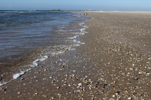 Many Shells on Matagorda Beach-Matagorda, Texas