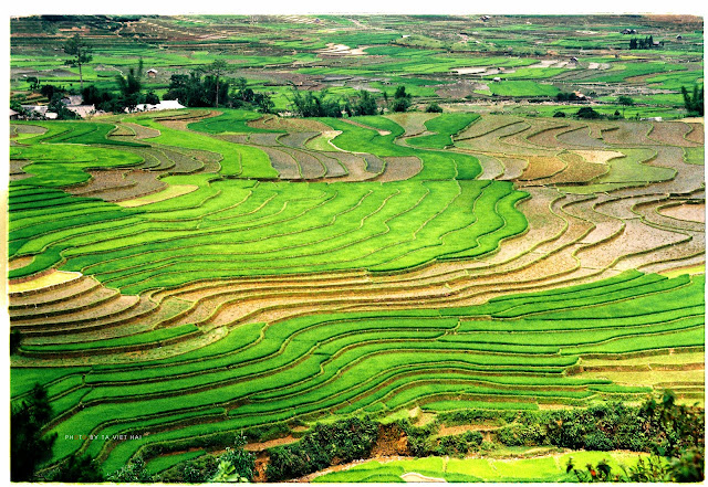Beautiful Terraced Fields