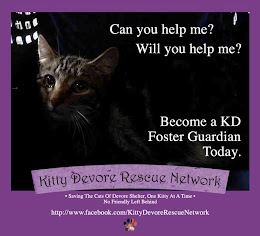 Kitties gonna die and shit.  save them by becoming a foster or adopter today!