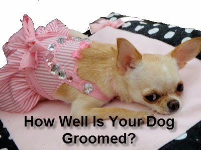How To Groom a Dog - How Well Is Your Dog Groomed?