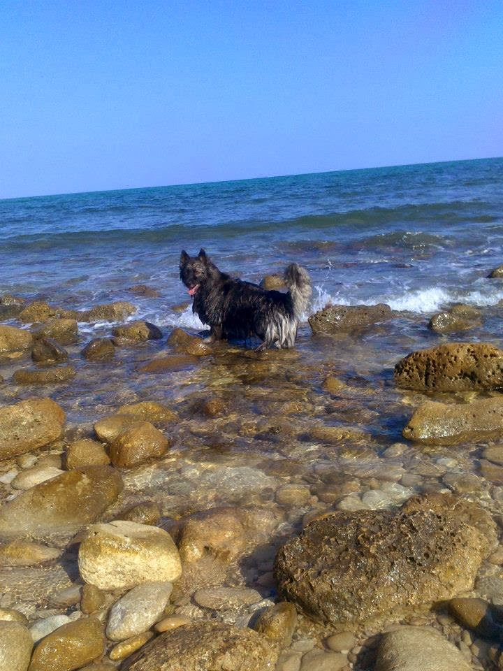 beach for dogs el campello