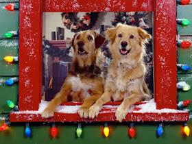 Imágenes Graciosas, Esperando Navidad