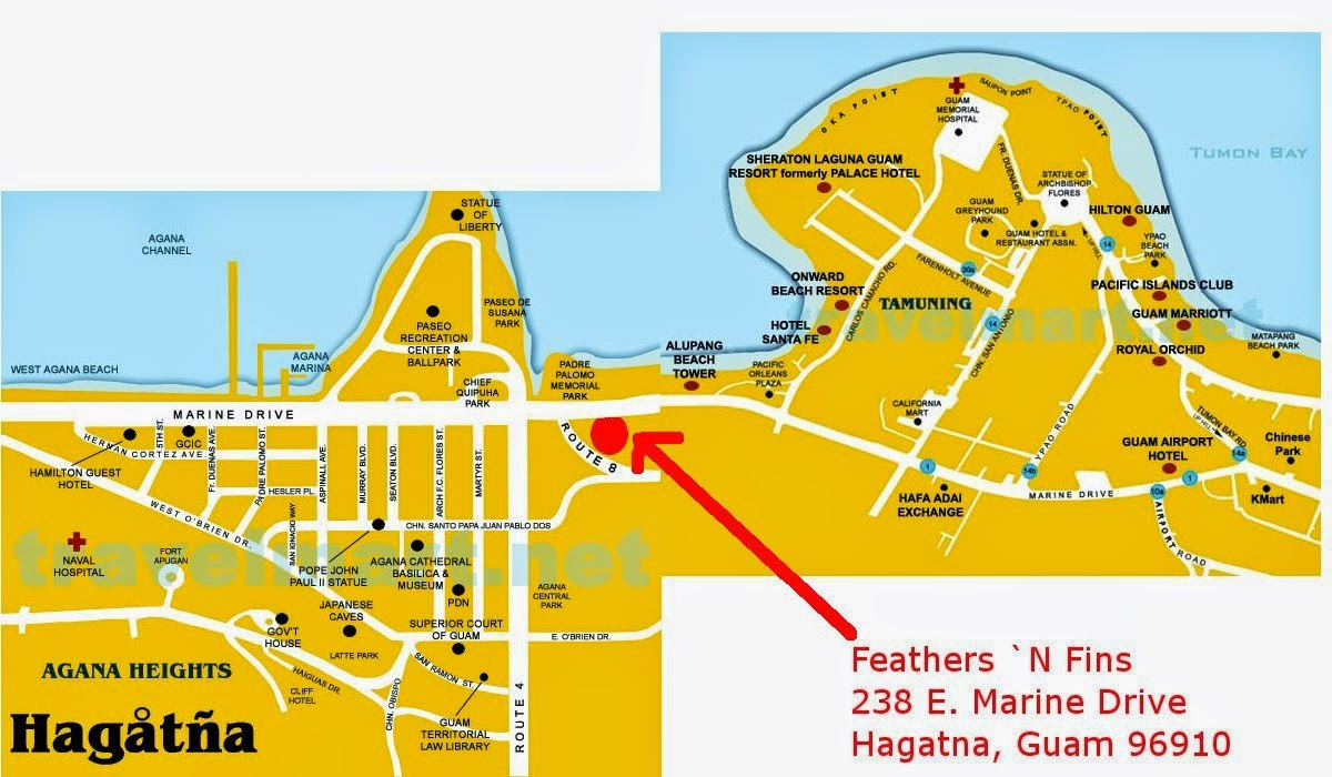 Feathers N Fins Pet Store Location - Guam location