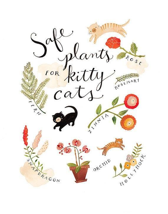 Cats In Gardens Nontoxic Plants For Cats